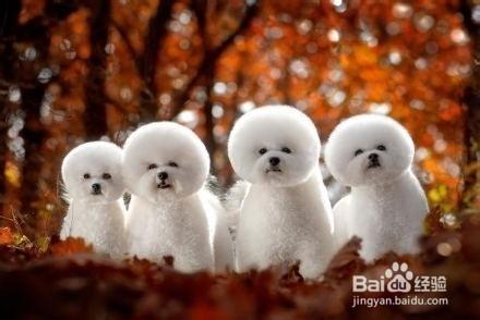 生活中常见的八个狗狗品种(小体型犬)